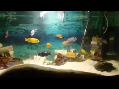 Maison Reef, Membe Deep, Msbo Magunga, Luwino Yellow Head