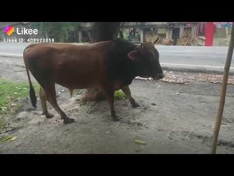 Sex in buffalo