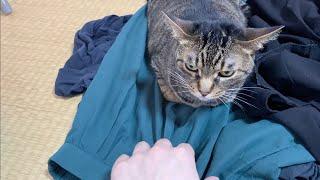 凶暴猫から嫁のスカートを奪おうとした結果...