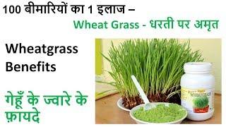 Girme's Wheatgrass - धरती पर अमृत / Wheat Grass Powder Benefits / गेहूँ के ज्वारे के फ़ायदे
