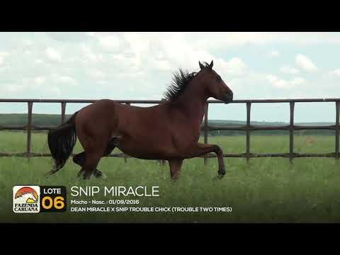 LOTE 06 - SNIP MIRACLE