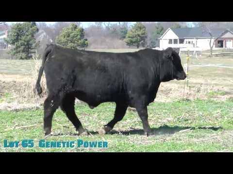 Lot 65  Genetic Power