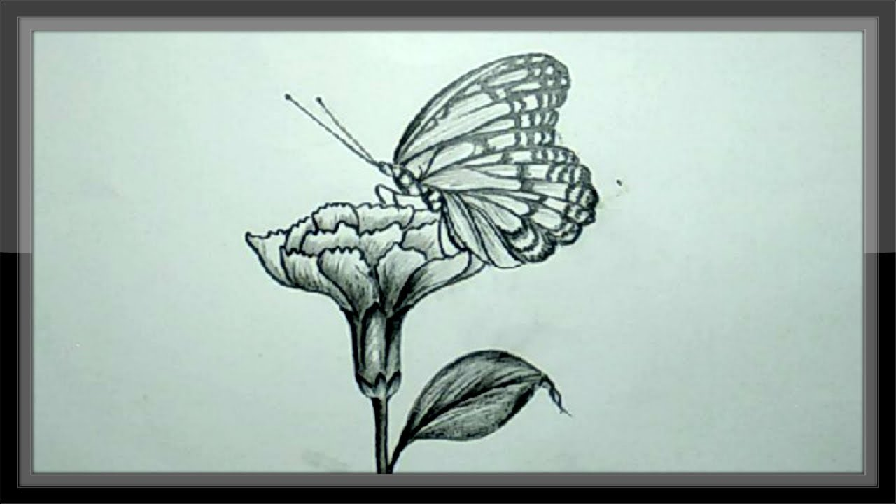 Easy pencil drawing tutorial how to draw a butterfly