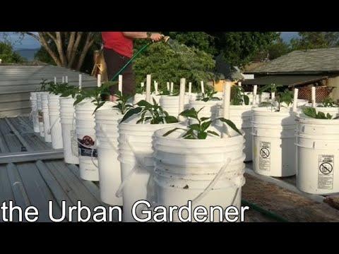 Episode 19 - Growing Peppers 2017 Part 3 - Rooftop Gardening