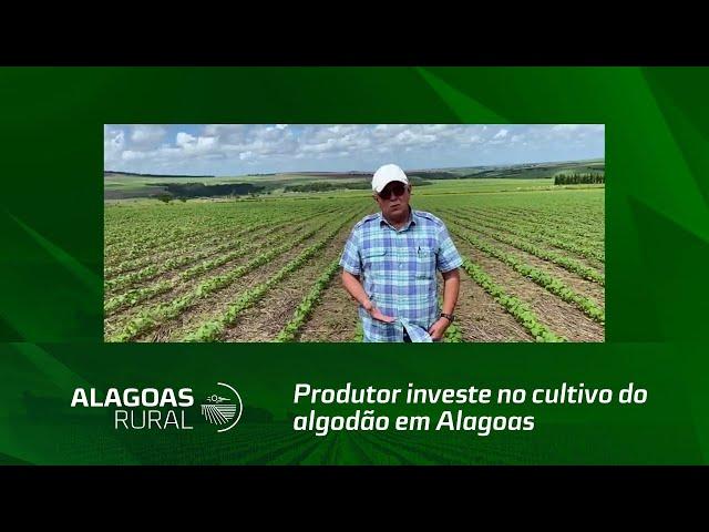Produtor investe no cultivo do algodão em Alagoas