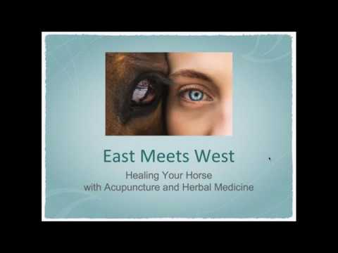 East Meets West: Heal Your Horse Using Acupuncture and Herbal Medicine #horsetherapies
