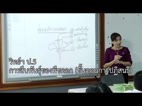 วิทยาศาสตร์ ป.5 การสืบพันธุ์ของพืชดอก (ขั้นตอนการปฏิสนธิ) ครูชวนพิศ แสงสวย