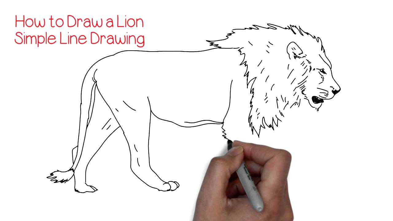 How to Draw a Simple Lion  YZArts  YZArts  YouTube