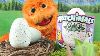Hatchimals Hatching Video Eggs Opening Draggles Giant Toy Review Draggles & Pengualas for kids