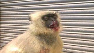 Kanpur : बेजुबान बंदर को पीट-पीटकर किया लहूलुहान | Kanpur News | NYOOOZ UP