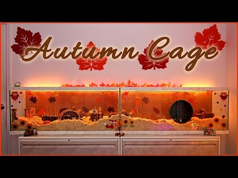 Carob's AUTUMN Hamster Cage Theme!
