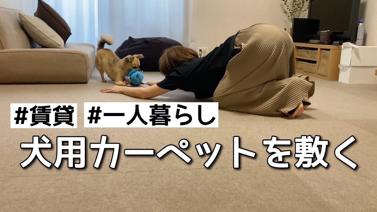 犬が床で滑らないために滑り止めマット敷いてみた【賃貸暮らし】