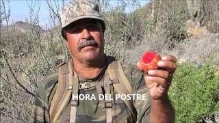 Gambar cover DEGUSTANDO PITAHAYAS EN EL DESIERTO CALIFORNIO