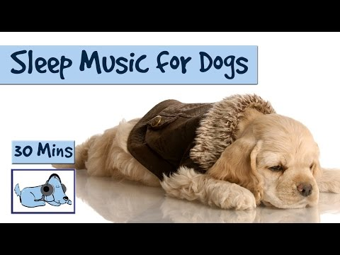 relaxing-sleep-music-for-your-pooch!