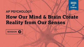 How Our Mind & Brain Create Reality from Our Senses | Live Review Session 3 | AP Psychology