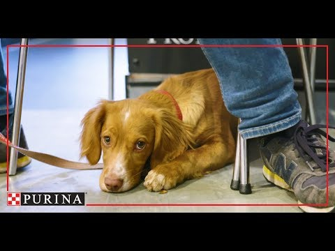Purina In Society: Our Pet Obesity Prevention Commitment