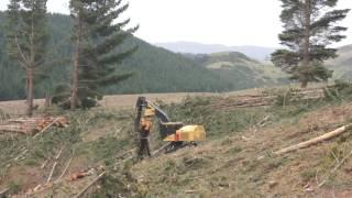 Alpine Grapple 3 Gillion Logging Waimate Forest