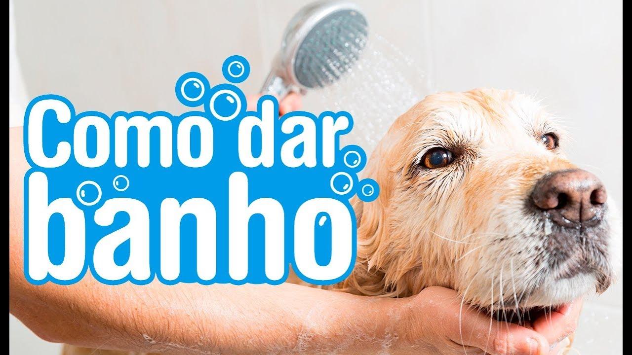 44054a7e3 Como dar banho em cachorro em casa - YouTube