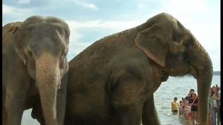 Индийские слоны отказались купаться в озере Смолино