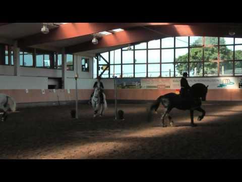 Tag des spanischen Pferdes bei Ziethen