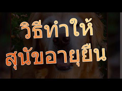 สุนัขอายุยืนกี่ปี วิธีทำให้สุนัขอายุยืน สุนัขโตเต็มวัยอายุเท่าไหร่ โปรแกรมคำนวณอายุหมา