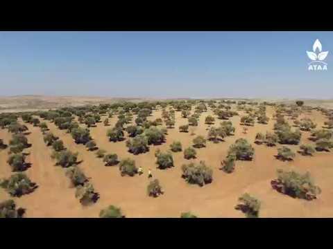 مراحل تنفيذ مشروع زراعة الزيتون في ريف إدلب