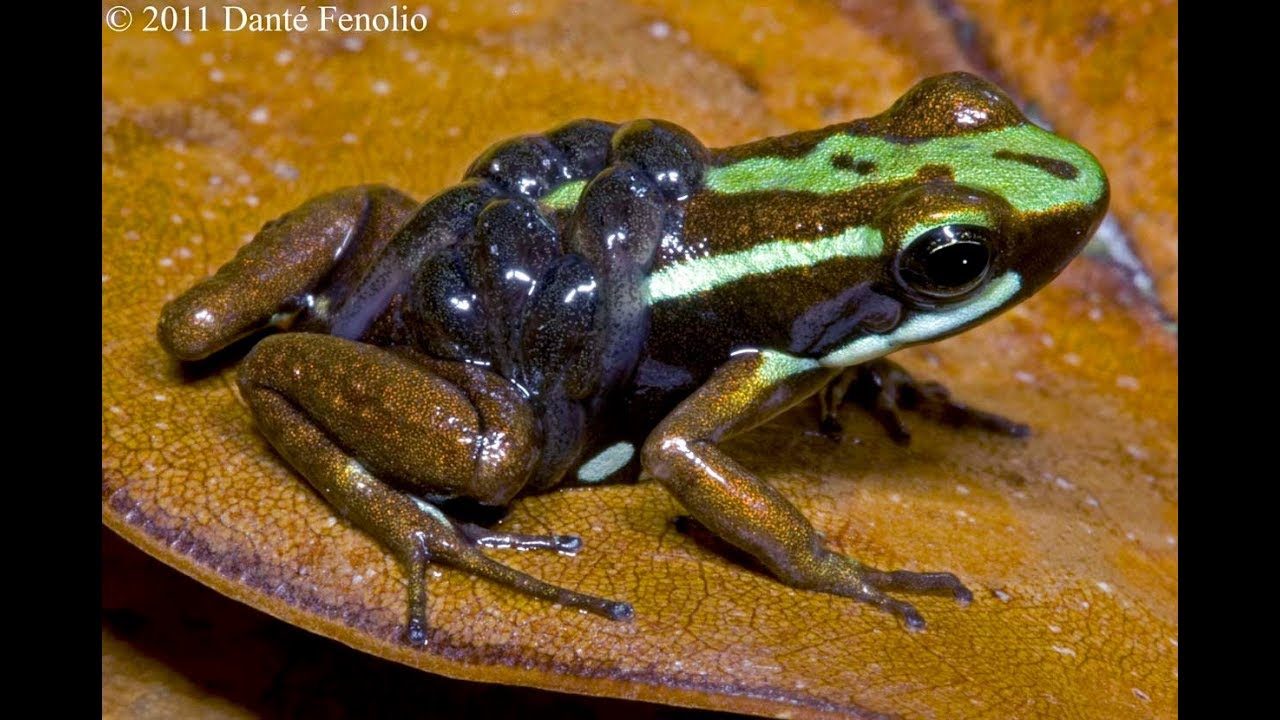 parental care in amphibians introduction