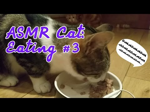ASMR Cat: Eating #3 - Wet Food Only [no talking] [30 minutes] [Requested]