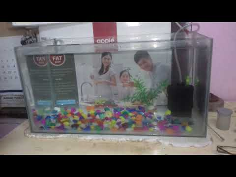 How to clean the fish tank