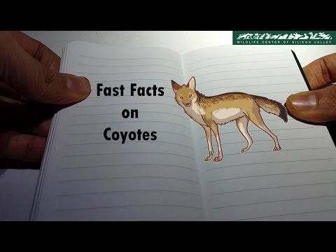 WCSV: Fast Facts On Coyotes