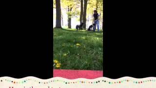 Making Friends, Dog Training, St. Cloud Mn, Brainerd Mn