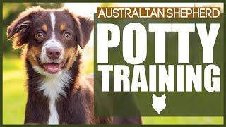 How To Potty Train Your AUSTRALIAN SHEPHERD