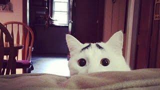 Коты, Которых Природа Наделила Необычным Окрасом