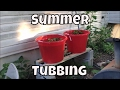 OutDoor Guppy Pond Summer Tubing Guppy fish Ponds Breeding Guppies outside mini pond Fish Room VLOG