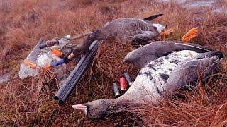 Охота на гуся с манком и чучелами 2017