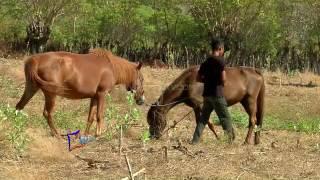 Download Mp3 Main Jaran Sumbawa  - Jendela Part 1  13/11