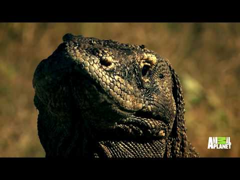 Could A Living Dinosaur Really Be Stalking The Rivers Of Liberia? | Expedition Mungo