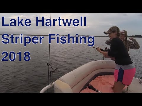 Lake Hartwell Striper Fishing - Herring On Down Lines