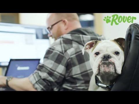 Rover Dog Sitting Jobs | Gig Economy Jobs | JobMonkey