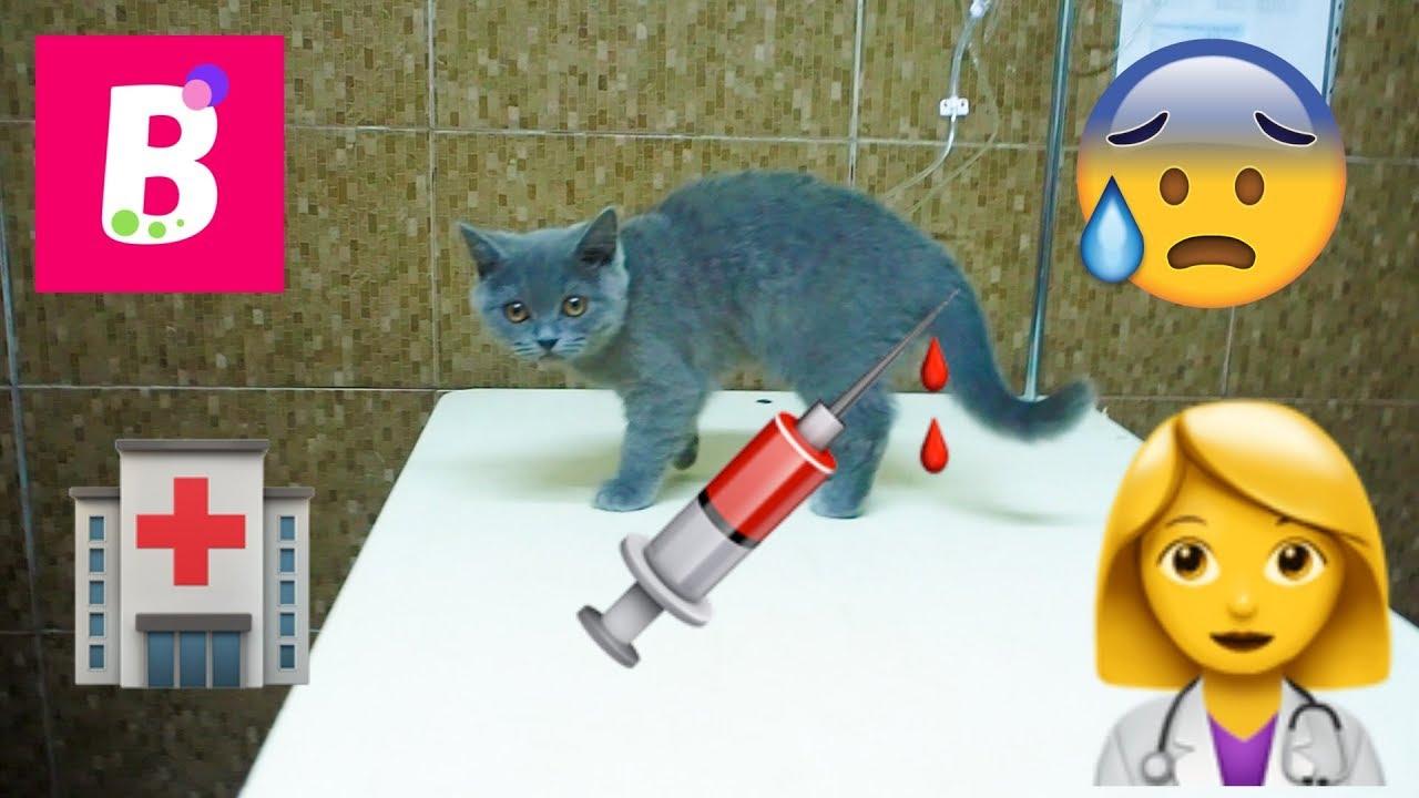 Injecție de pisică de vierme. Cele mai ieftine pastile pentru viermi