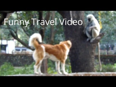 Funny Travel Video: Dog vs. monkey in India