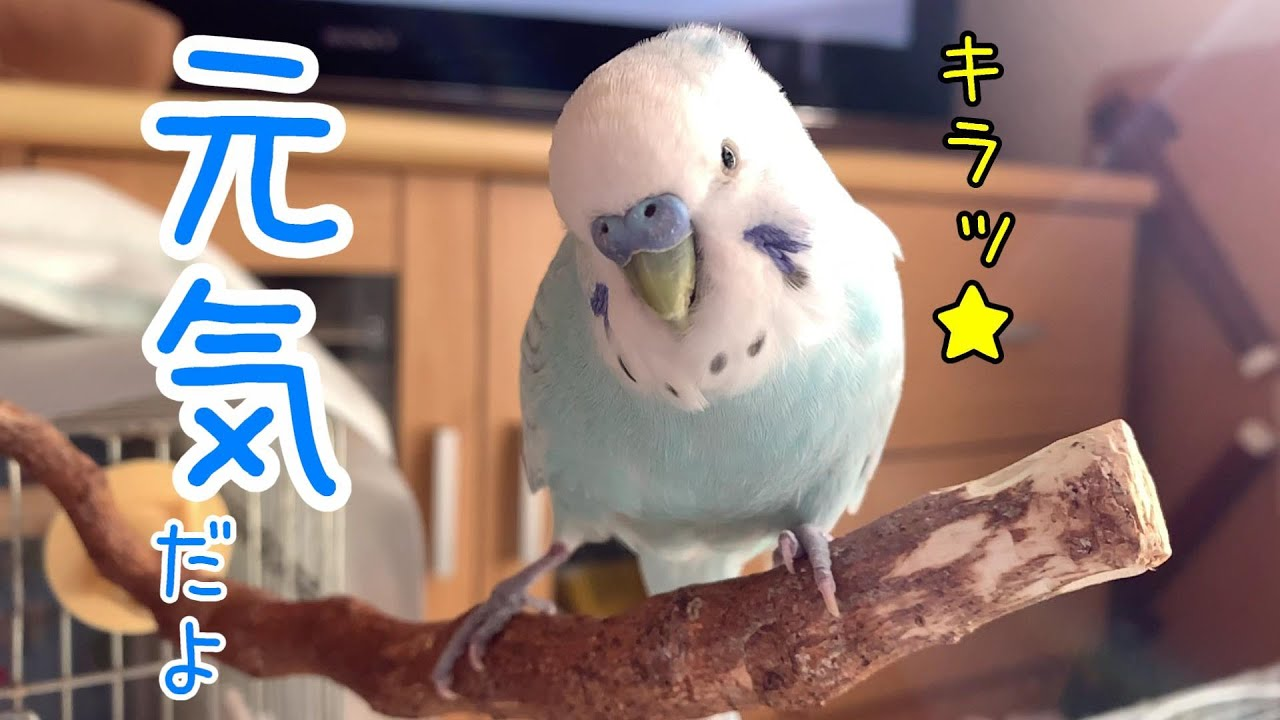 そらちゃんの奇跡は継続中~!