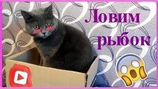 Приложения для кошек: Ловим рыбок или Simulatоr Cat Fishing🐾
