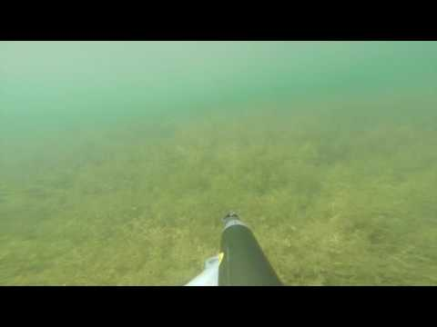 speargun fishing pactola, black hills