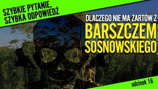Dlaczego nie ma żartów z barszczem Sosnowskiego? | Szybkie pytanie, szybka odpowiedź #16