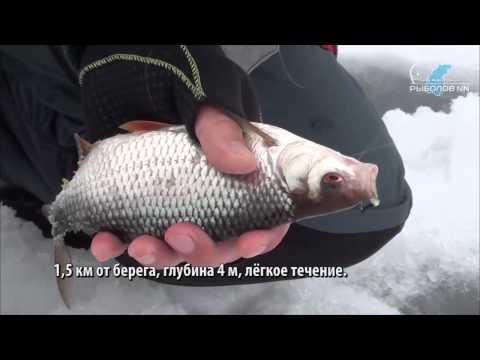 ловля плотвы зимой в нижегородской области