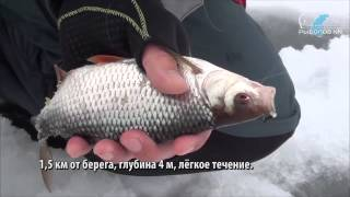 Горьковське море. Ловля плотви на безнасадку. с. Дресвищи. Сайт ''РыболовНН''