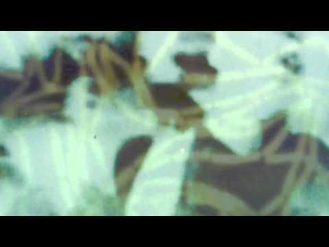 Ekkohaus - Keep You Eyes On Me (Noschool Album) Video Edit