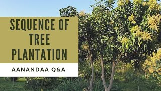 Q&A | How to start Tree Plantation?