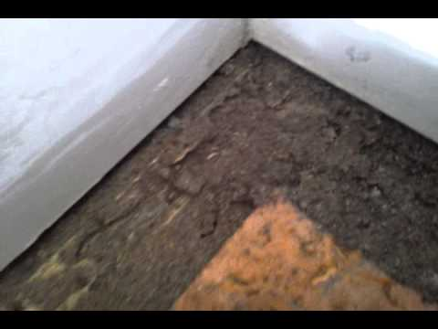 Termites Under Carpet Youtube